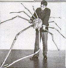 De Japanse reuzenkrab, grootste dieren ter wereld