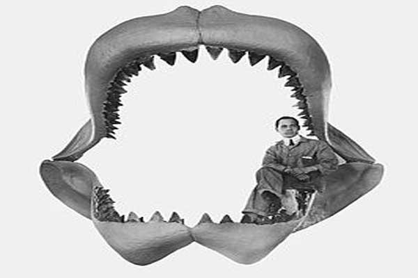 De megalodon: een haai van 20 meter (plaatjes en video)