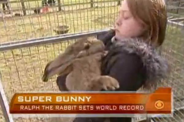 Ralph is het grootste konijn ter wereld