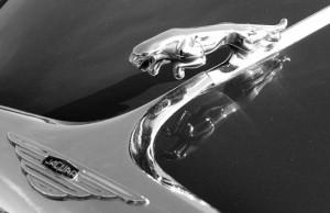 Jaguar, alle auto musea in Nederland
