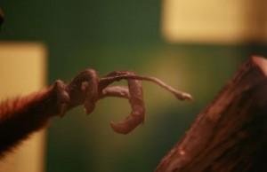 Middelvinger vingerdier