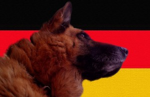 Duitse-herder
