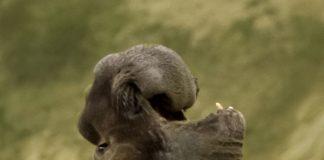 luidruchtigste dieren
