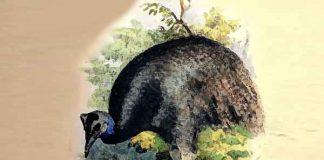 Wat zijn de grootste vogels ter wereld