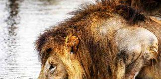 Beschermen van bedreigde diersoorten: