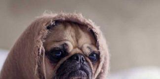 Mensen hebben meer medelijden met honden dan met medemens