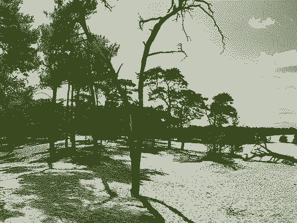 Mooiste bos van Nederland is de Loonse en Drunense Duinen – Een top 17