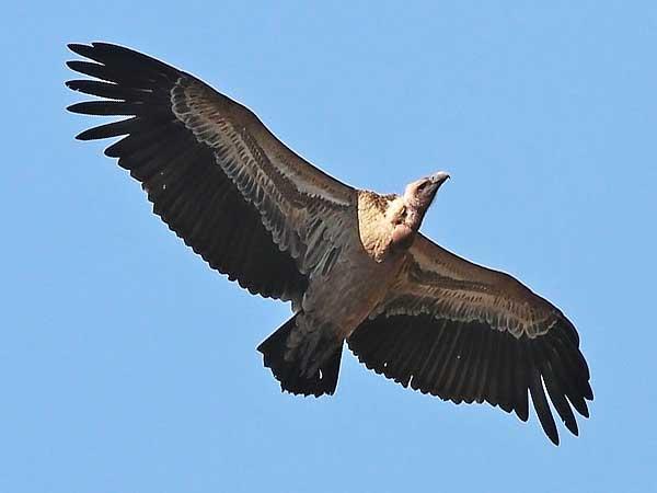 Hoogst vliegende vogels ter wereld