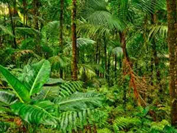 Top 10 landen met het meeste bos en bosbedekking in km²