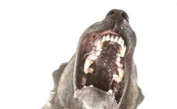 Welk type honden bijten het meest en het hardst?