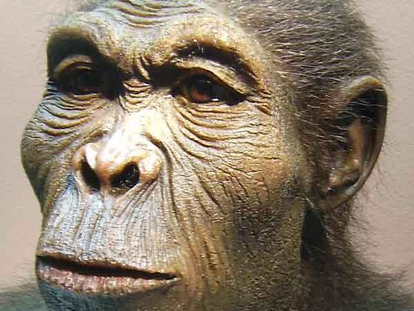 Meest voorkomende zoogdieren ter wereld – De top 10