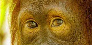 Meest beroemdste bedreigde diersoorten