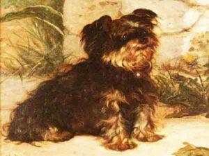 Langst levende hondenrassen - Yorkshire terriër
