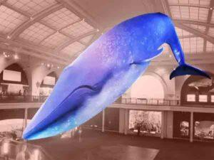 Blauwe vinvis -mGrootse walvissen ter wereld