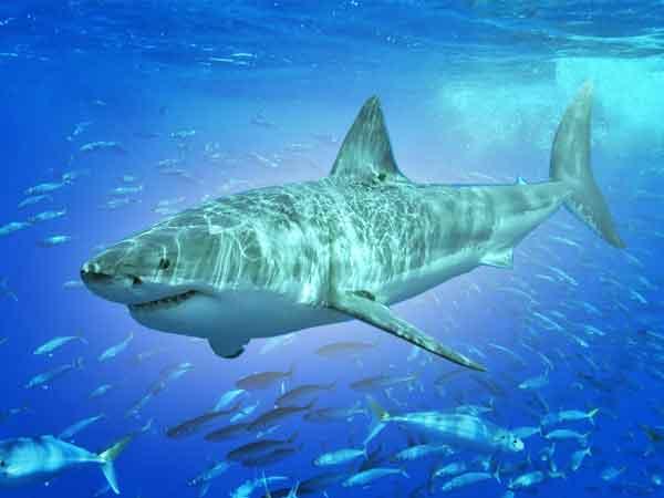 Grootste haaien ter wereld