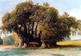 Kastanjeboom van de Honderd Paarden