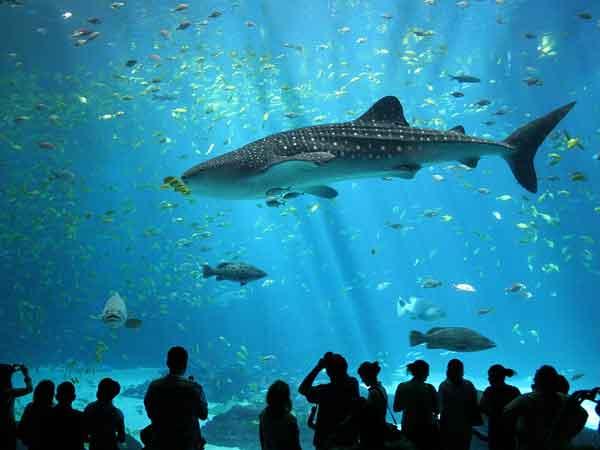 Grootste aquariums ter wereld