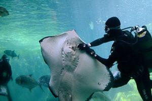 uShaka Marine World Aquarium Durban