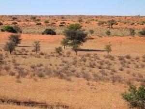 Kalahari in Namibië