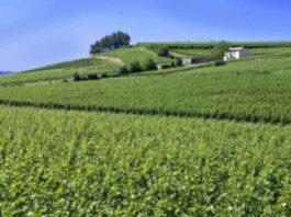 Beste Franse wijnstreken