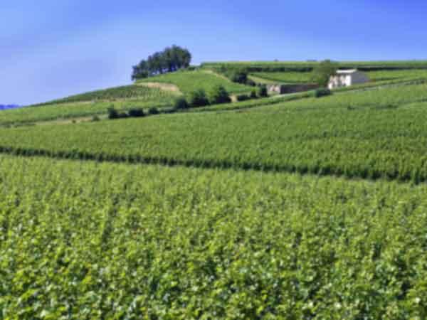 10 Beste Franse wijnstreken – Een overzicht