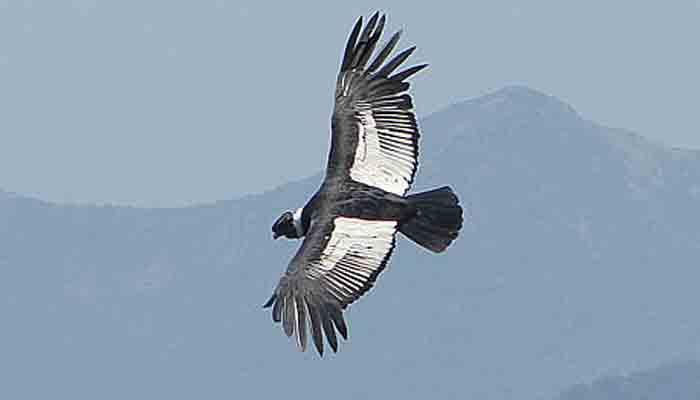 Top 10 grootste roofvogels ter wereld – een overzicht