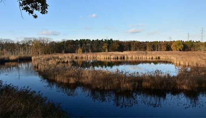 Top 10 Mooiste natuurgebieden van België om te bezoeken