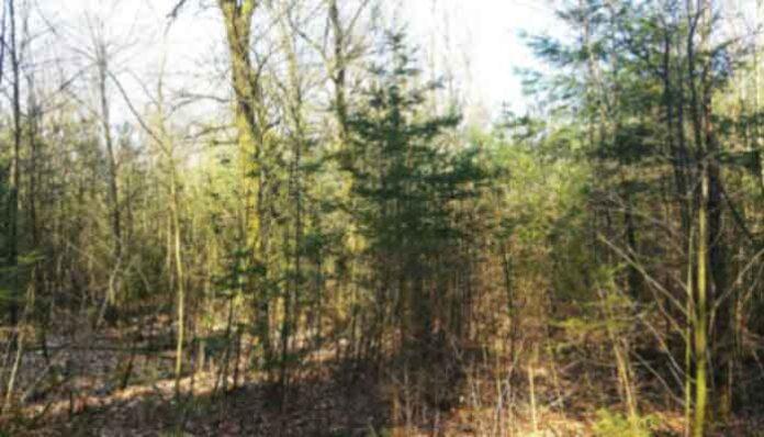 Top 10 Meest voorkomende bomen in het bos in Nederland