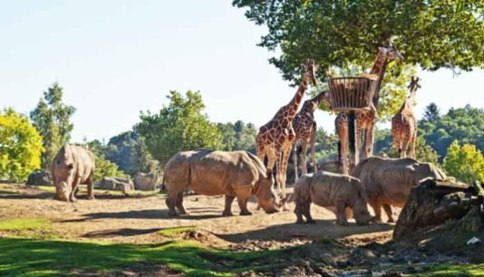 Grootste dierentuinen in Frankrijk